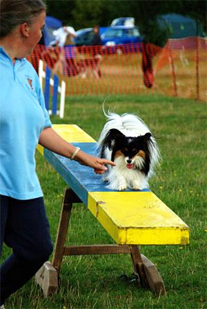 Hund på en planka